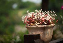kwiaty doniczkowe - pieknosc