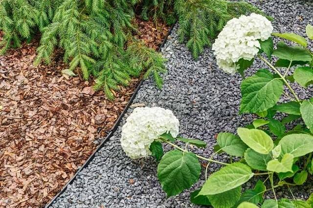 Sprawdź od czego zacząć zakładanie ogrodu?