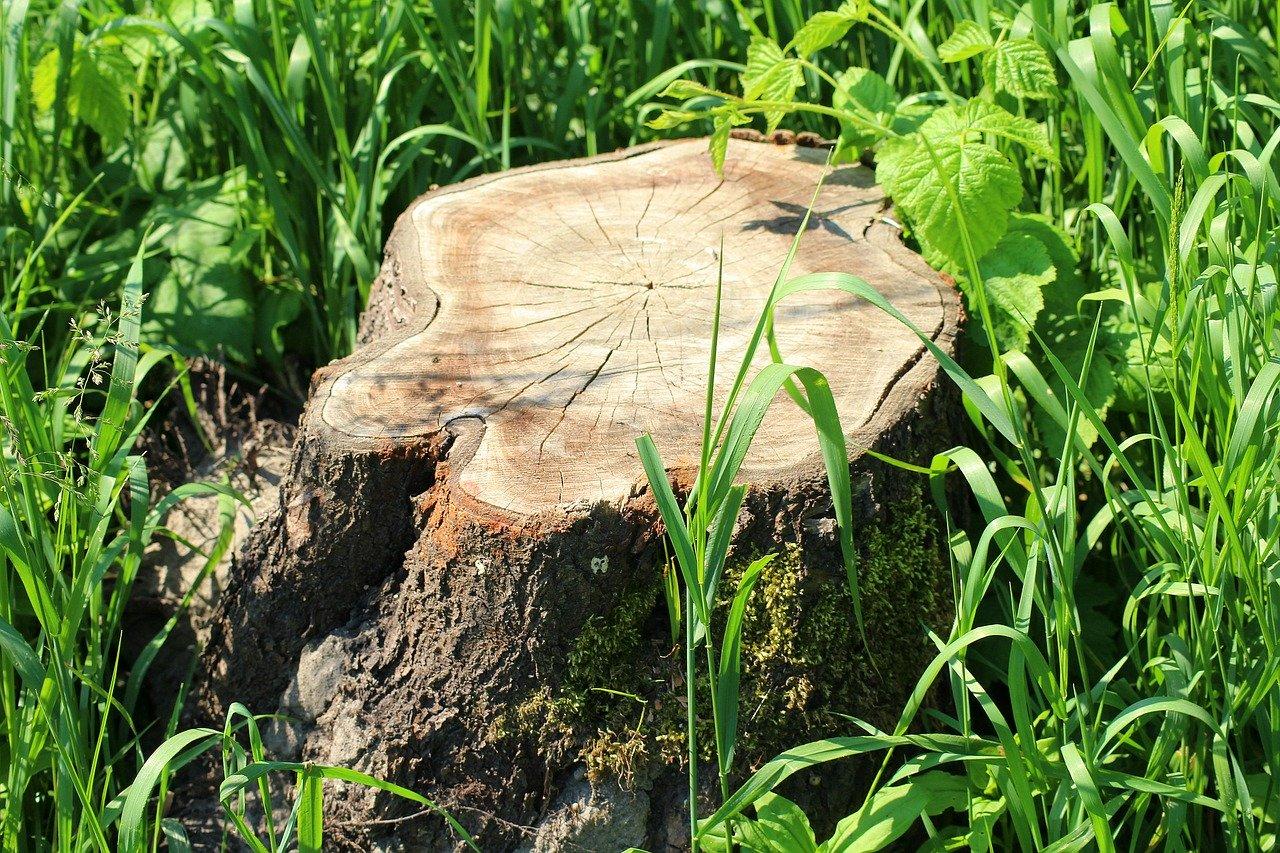Kiedy można ściąć drzewo? Aspekty prawne wycinki drzew