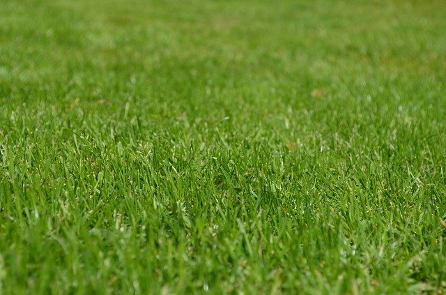 Kratka trawnikowa – sposób na wzmocnienie nawierzchni
