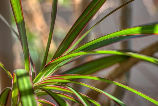 Najmodniejsze rośliny doniczkowe we wnętrzach – na co postawić?